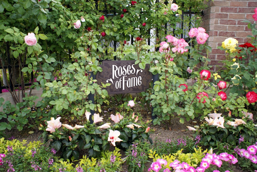 Roses_of_Fame