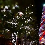 世界一の光のツリー、53万球の電飾でギネス世界記録を更新