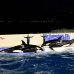 鴨川シーワールド、初公開!『Kamogawa Sea World Christmas Special Night 2013』12月21日~12月24日の4日間限定で開催!