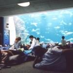 鴨川シーワールド、水族館で一夜を過ごす「トロピカルナイトステイ」開催