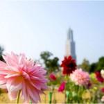 ハウステンボス「秋の花と光と音楽の王国」開幕