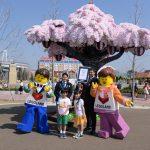 『レゴ®ブロックで作られた最大の桜の木』ギネス世界記録®挑戦イベント開催!1周年アニバーサリーキャラクターショーも開催