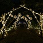 新感覚フラワーパーク「HANA・BIYORI」初の冬のライティングイベント『HANAあかり』開催中!